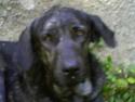 michelle ya ha visto al perro y tiene fotos yujuuuuuuuuuuuuu Roquef10