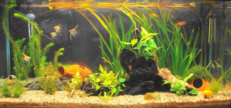 l aquarium de kdfred 200litres - Page 2 Dsc00115