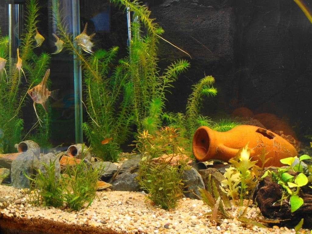 l aquarium de kdfred 200litres - Page 2 Dsc00119