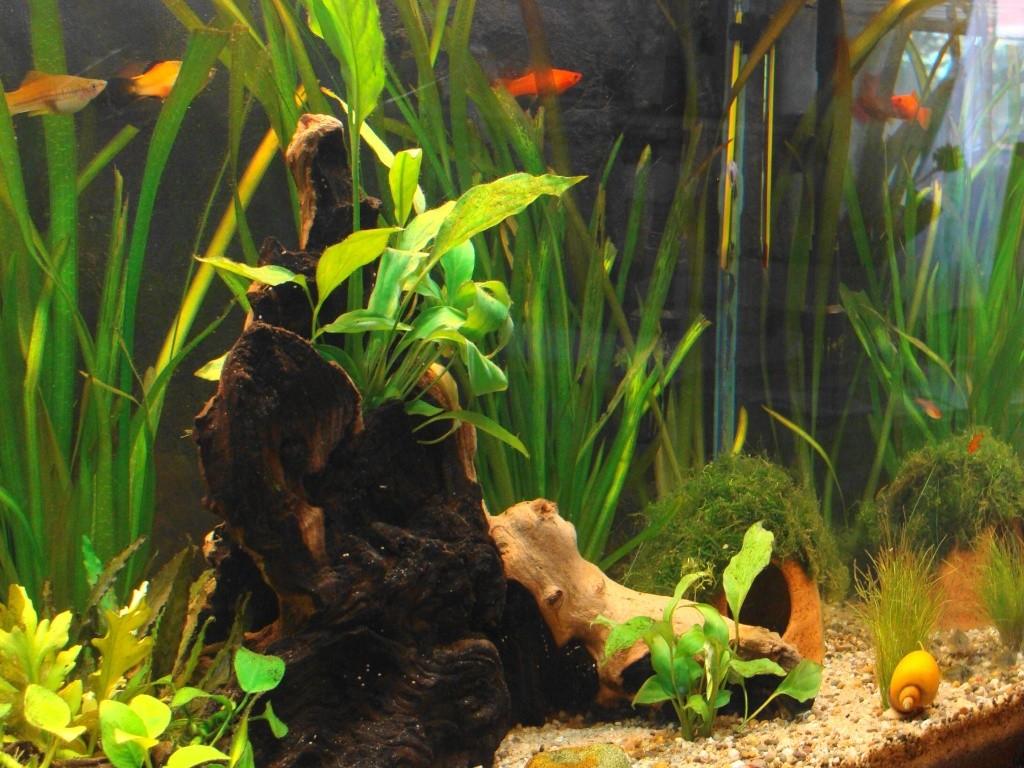 l aquarium de kdfred 200litres - Page 2 Dsc00120
