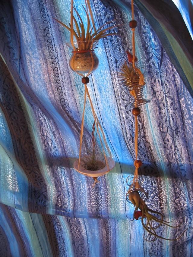 Tillandsias argentea, l'après-floraison - Page 2 Img_6310