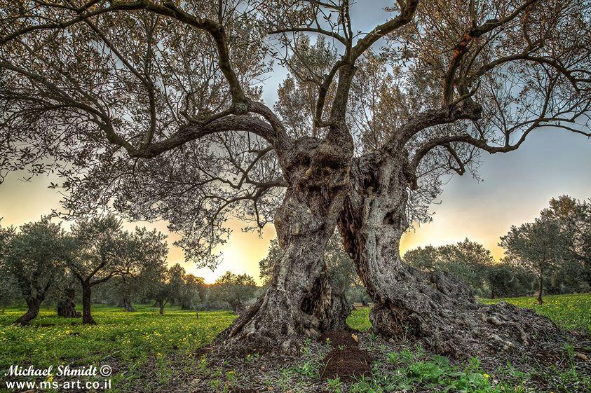 9 Common Jewish Symbols And the history  Olive_10