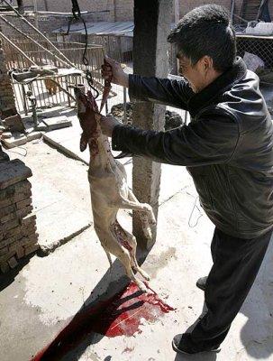Racismo animal=racismo inhumano Y1pmwd10