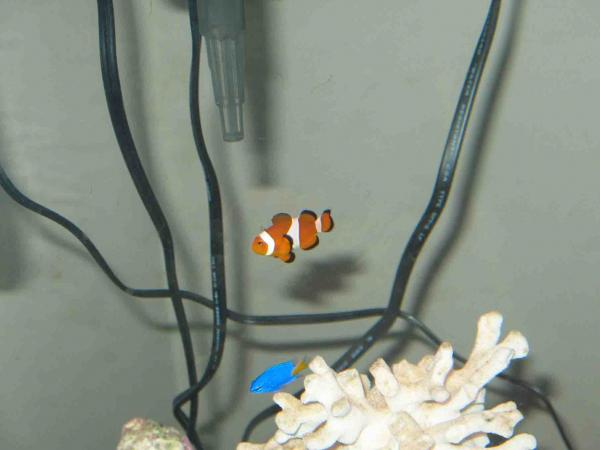 My 16 gallon Nano started end of August 2008 User2713