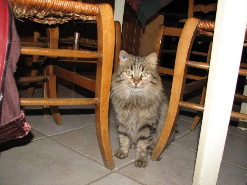 Lola, 1 an, petite miss à poils longs Img_2511