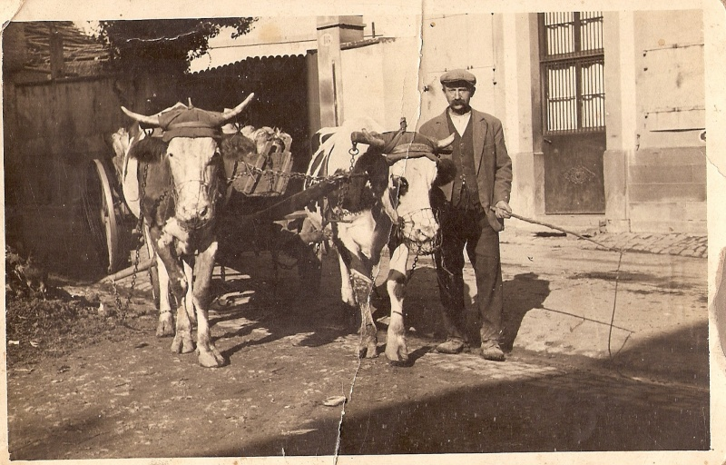 La vie à la campagne autrefois Numari16