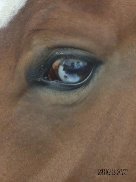 """Concours photo """" oeil de chevaux"""" venez votez ! Dscf4110"""