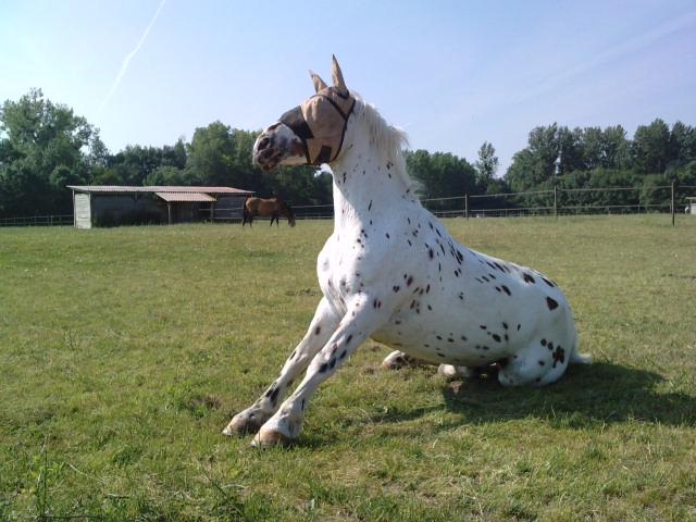 CONCOURS PHOTO : Les chevaux paresseux... - Page 2 Dako310