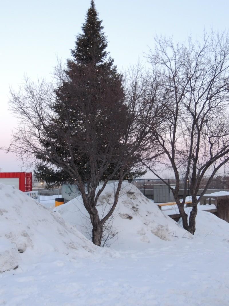 TR Montreal + New York du 19 Janvier au O6 Février 2O13 - Page 6 Dscn0930