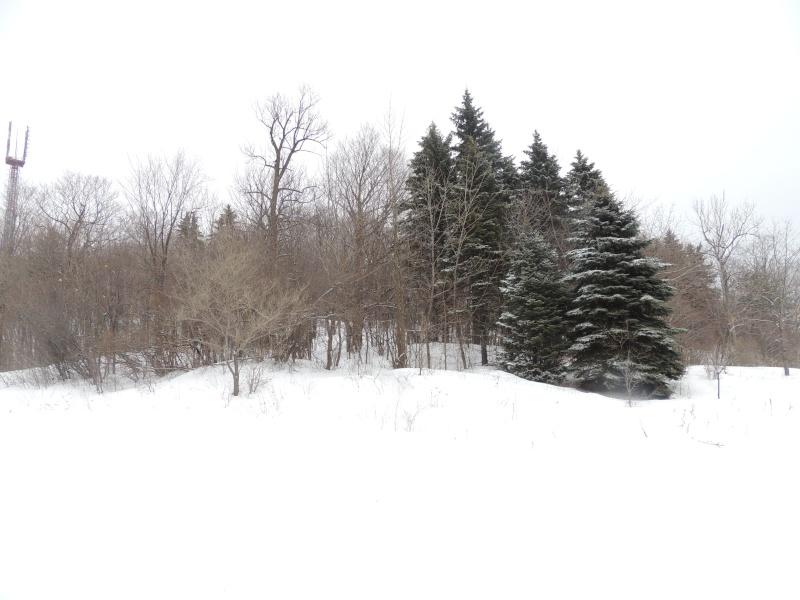 TR Montreal + New York du 19 Janvier au O6 Février 2O13 - Page 8 Dscn1250
