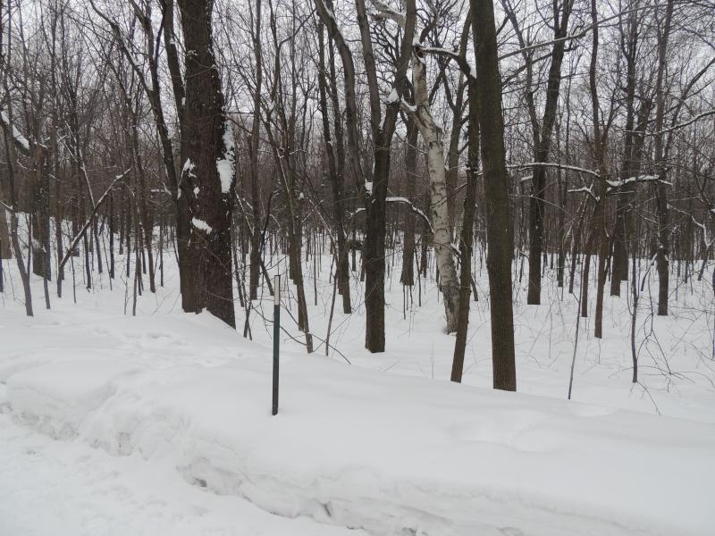 TR Montreal + New York du 19 Janvier au O6 Février 2O13 - Page 8 Dscn1310