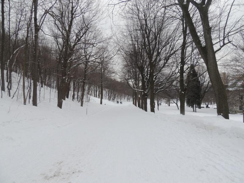 TR Montreal + New York du 19 Janvier au O6 Février 2O13 - Page 8 Dscn1323