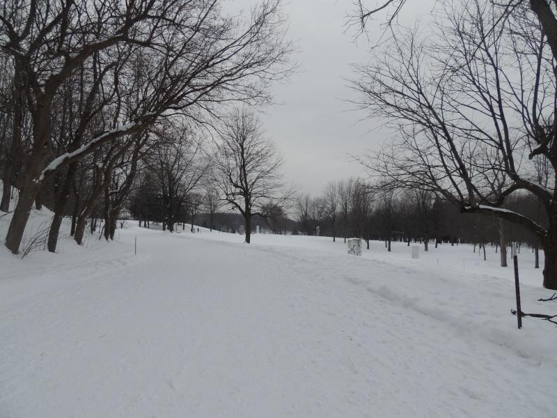 TR Montreal + New York du 19 Janvier au O6 Février 2O13 - Page 8 Dscn1324