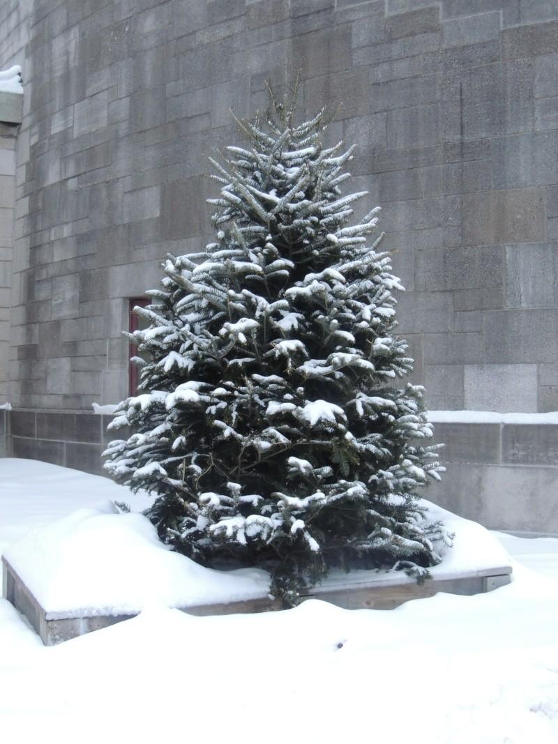 TR Montreal + New York du 19 Janvier au O6 Février 2O13 - Page 8 Dscn1334