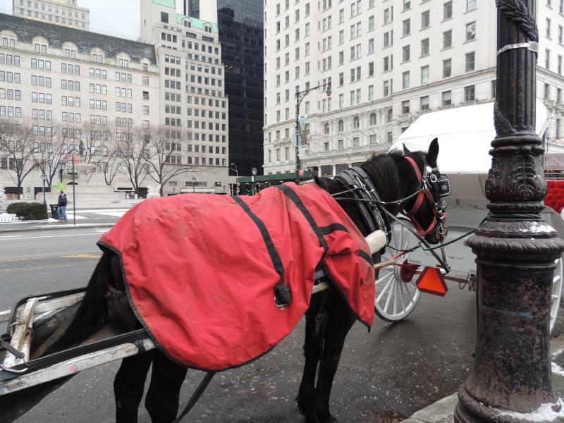 TR Montreal + New York du 19 Janvier au O6 Février 2O13 - Page 9 Dscn1767