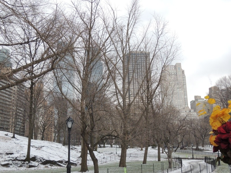 TR Montreal + New York du 19 Janvier au O6 Février 2O13 - Page 9 Dscn1770