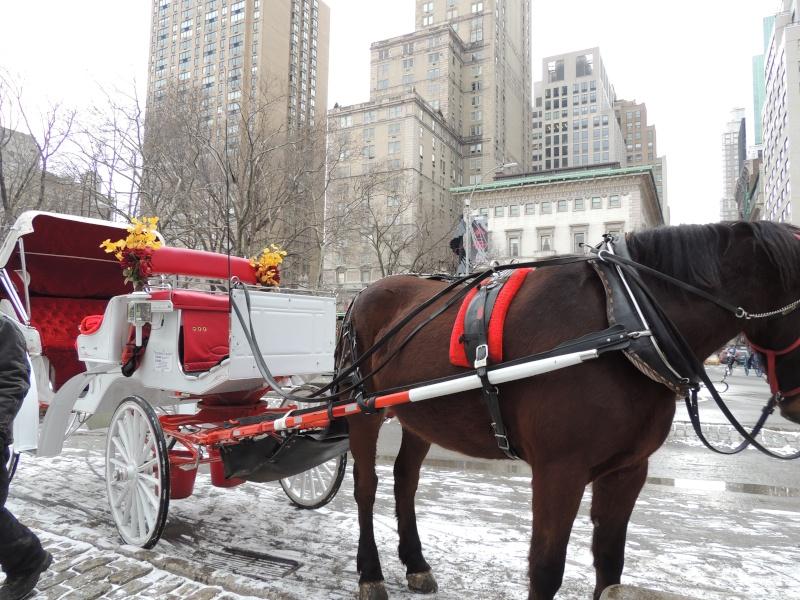 TR Montreal + New York du 19 Janvier au O6 Février 2O13 - Page 10 Dscn1785