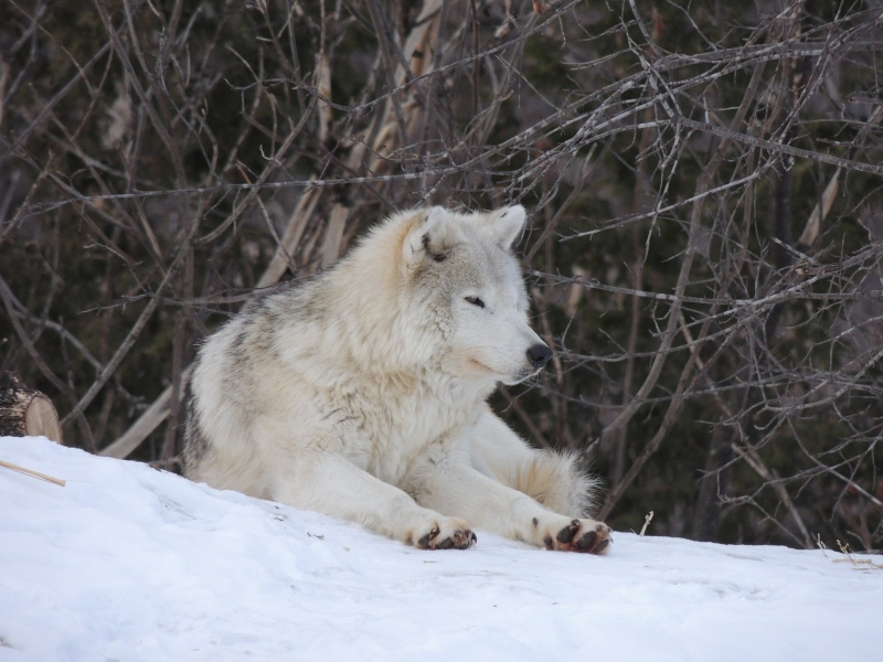 TR Montreal + New York du 19 Janvier au O6 Février 2O13 - Page 10 Dscn2060