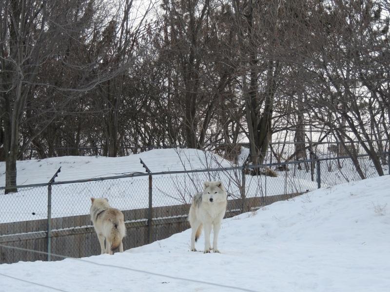 TR Montreal + New York du 19 Janvier au O6 Février 2O13 - Page 10 Dscn2070