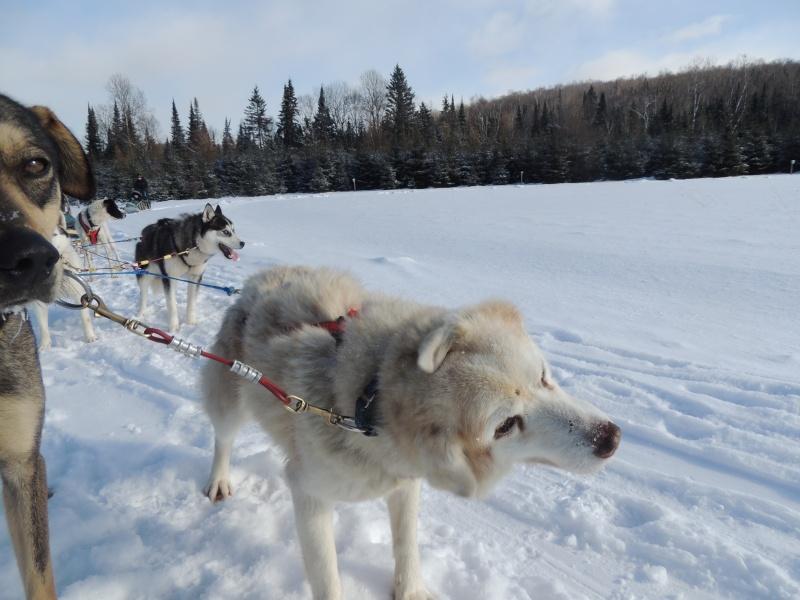 TR Montreal + New York du 19 Janvier au O6 Février 2O13 - Page 11 Dscn2136
