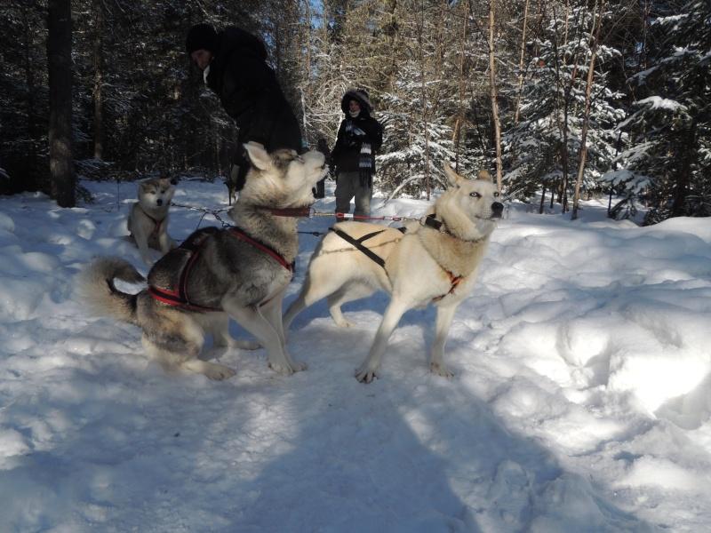TR Montreal + New York du 19 Janvier au O6 Février 2O13 - Page 11 Dscn2159