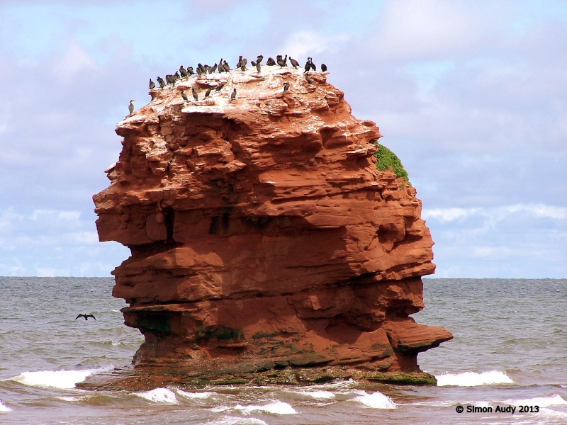 L'île aux cormorans Azle-d10