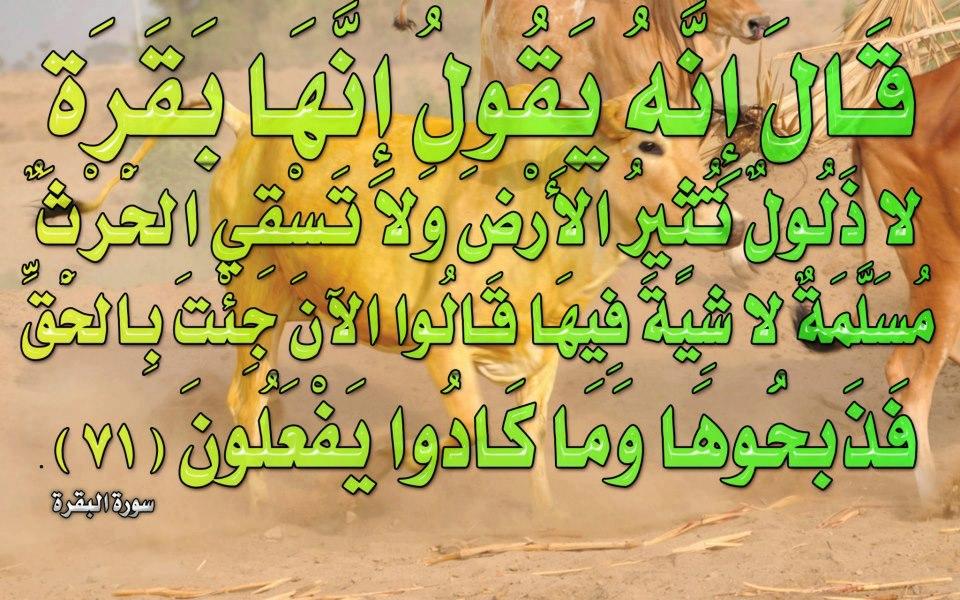 صور لآيات قرآنية كريمة مكتوبة أمام خلفية رائعة / الجزء الثالث 42643010