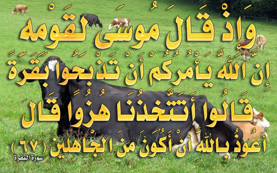 صور لآيات قرآنية كريمة مكتوبة أمام خلفية رائعة / الجزء الرابع 52691910