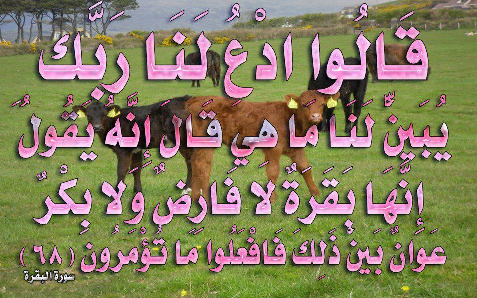 صور لآيات قرآنية كريمة مكتوبة أمام خلفية رائعة / الجزء الرابع 52757810