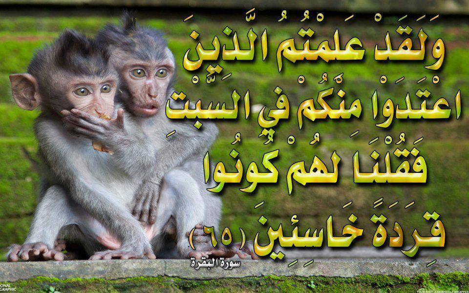 صور لآيات قرآنية كريمة مكتوبة أمام خلفية رائعة / الجزء الثاني 63053_10