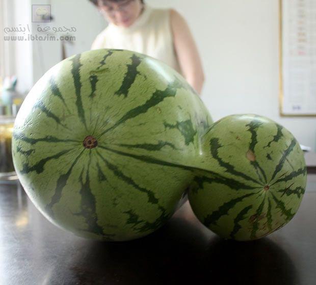الفن في الرقي أو مايسمى في بعض البلدان بـ ( البطيخ ) O11