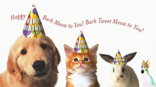 Happy Birthday Littlewid Dogpup10