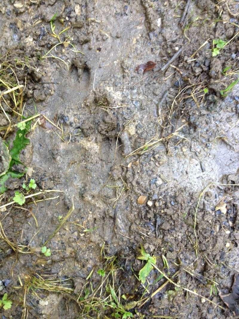 pieds,traces et indices - Page 19 Photo10