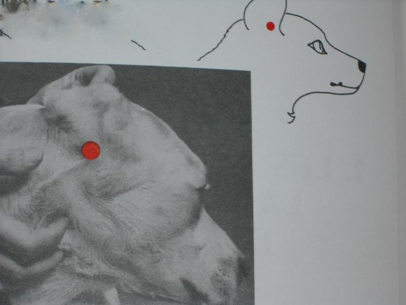 Acupuncture sur animaux domestiques Affect10