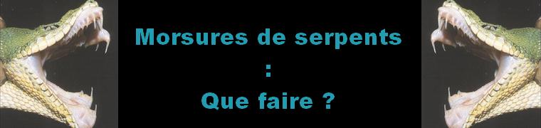 survie et adaptation morsure de serpent geste à suivre forum zoologie couleuvre de Montpellier France la vipère aspic