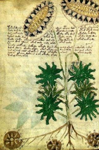 Pierre Barthélémy livre mystérieux Voynich Texte crypté langue inconnue document ancien inconnu forum ouvrage manuscrit