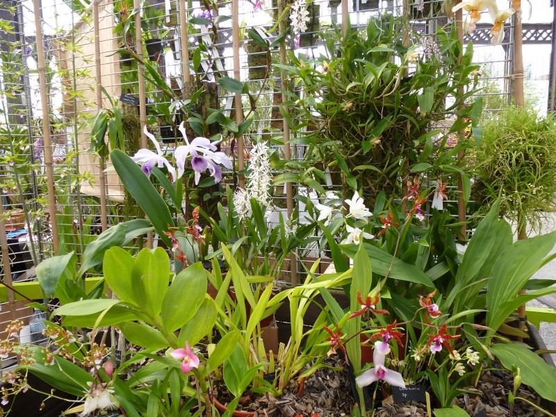 Passion orchidées à Nantes - 27 au 29 septembre 2013 P1010510