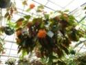 visite du conservatoire de bégonia Orange11