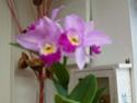 Passion orchidées à Nantes - 27 au 29 septembre 2013 P1010519