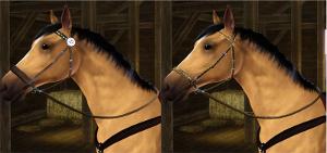 Лошади Image248