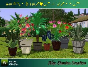 Цветы - Страница 5 Lsr1111