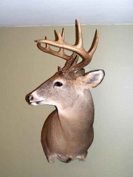 Mon premier Buck Dscf3112