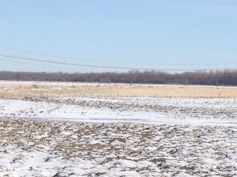Depuis le redoux, plusieurs sont retournés aux champs- 16 photos du 17 mars 2013 Image11