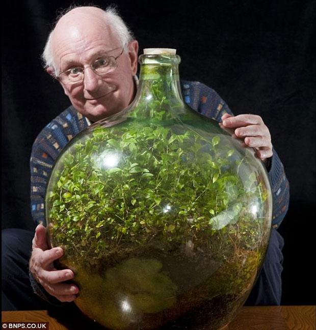 Enfermée depuis 53 ans, une plante a créé son propre écosystème pour survivre ! Enferm10