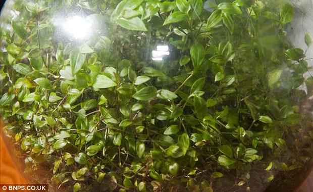 Enfermée depuis 53 ans, une plante a créé son propre écosystème pour survivre ! Enferm12