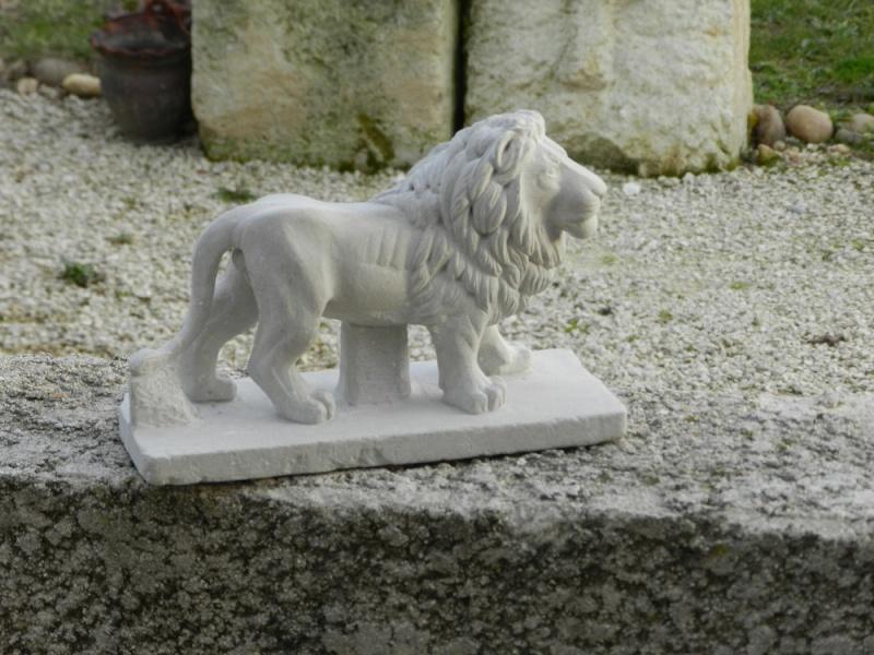 Lion Dscn4810