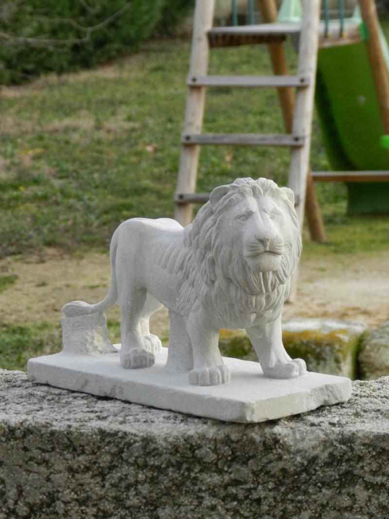 Lion Dscn4811