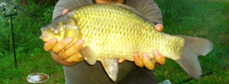 Pêche rapide en sablière Dsc_0110