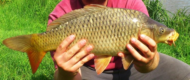 Pêche rapide en sablière Dsc_0111