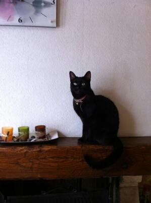 Flower petite chatonne noire née en septembre 2010 - Page 3 Flower10